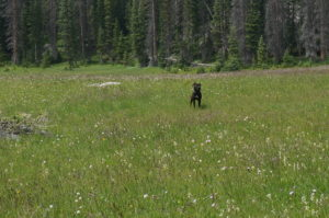 Routt - Chica meadow
